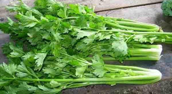 Rau cần tây rất tốt cho sức khỏe bà bầu