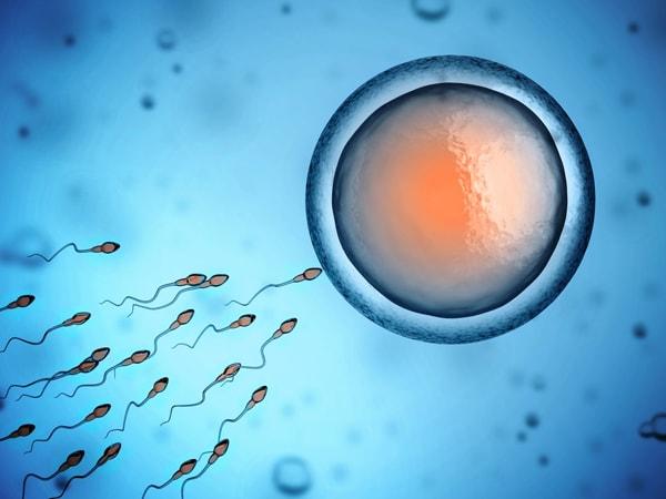 Trứng tồn tại trong tử cung từ 12 – 24 giờ