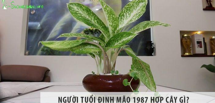 Cây bạch mã hoàng tử có độc không? Có nên trồng trong nhà?