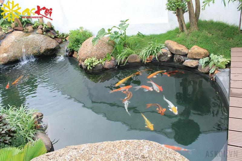 Thiết kế hồ cá phía sau nhà