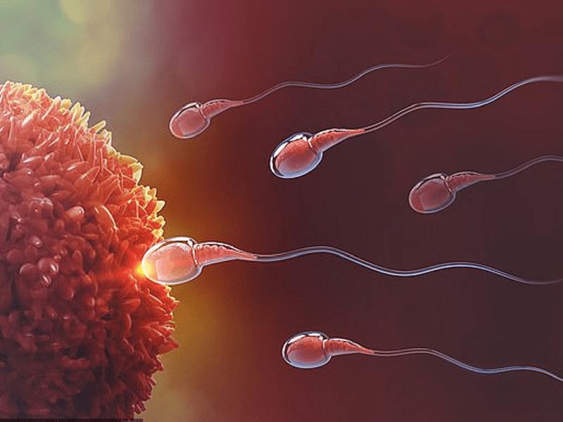 Quá trình tinh trùng tiếp cận trứng