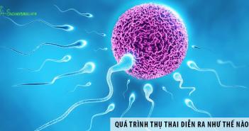 Quá trình thụ thai diễn ra như thế nào?
