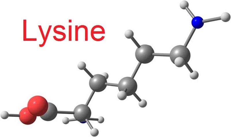 Lysine là gì? - Tất cả những điều cần biết khi sử dụng Lysine cho bé1
